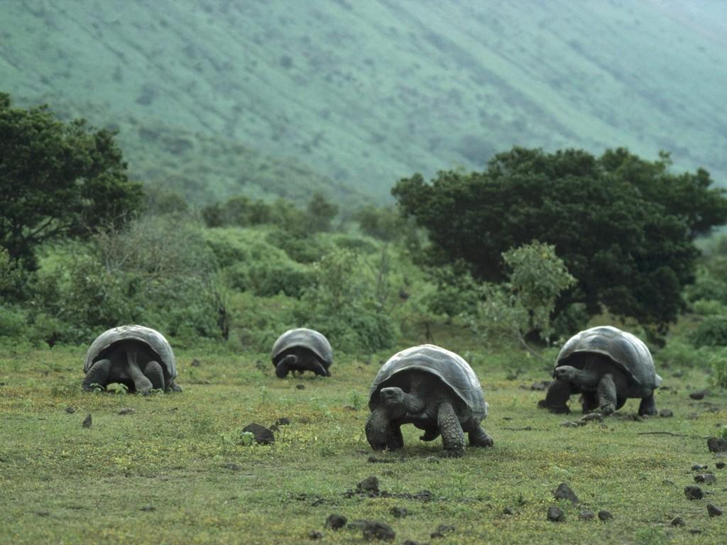 Tartarugas de Galápagos