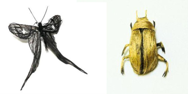 insetos_de_cabelo