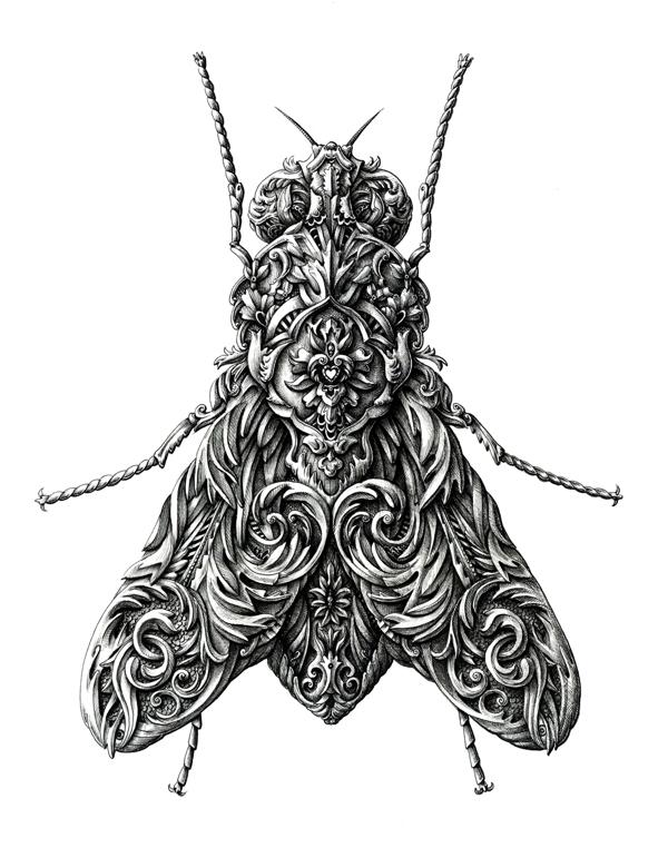 mosca Artista europeu faz desenhos surpreendentes de insetos Papo de Praga