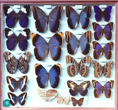 museu_entomologico_seara