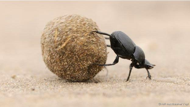 150227204102_beetle_624x351_npl_nocredit-300x169 Qual ser vivo domina a Terra? Pragas