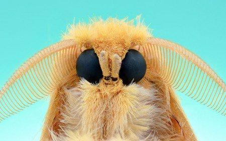moth-450x281