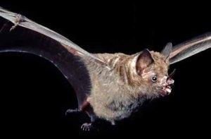 3 Doenças Causadas pela Falta de Manejo de Morcegos
