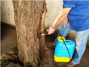 Descupinização – Cupins em árvores prevenção e tratamentos