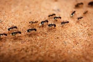 Desinsetização – Como Acabar Com Formigas Na Cozinha?