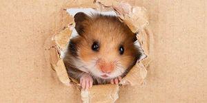 Maneiras de evitar ratos em casa