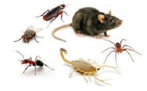 Controle de Pragas – Manter o seu comércio livre de pragas