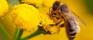 Dedetização – A vida das abelhas