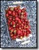 Een mengeling van verschillende soorten aardbeien