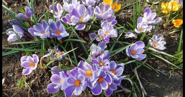 De lente is er!
