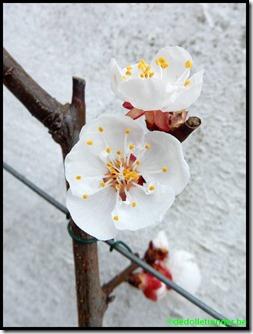 Bloemen bij de Tros Oranje