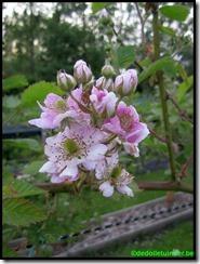 Bloemen van de braambes