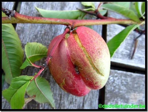 Witvlezige perzik