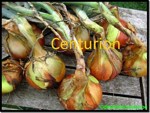 Ui 'Centurion'
