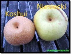 Kosui en Niesiecki
