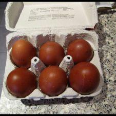 Eerste 6 marans eieren