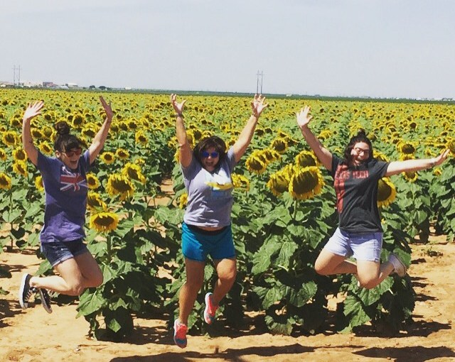 It's what the sunflowers do