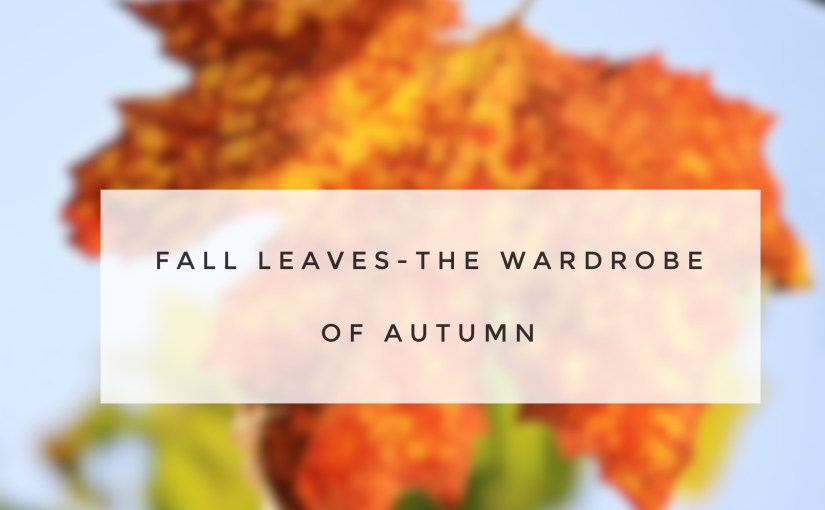 Fall leaves-The Wardrobe Of Autumn
