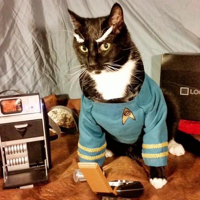 Cat-Cosplay-23