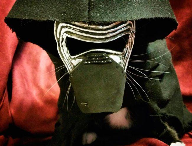 Cat-Cosplay-4