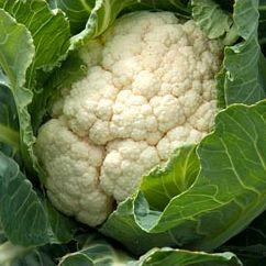 Cauliflower, Medallion F1 (Winter variety)