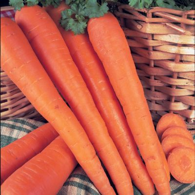 Carrot, James' Scarlet Intemediate.