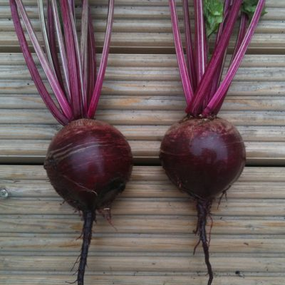 Beetroot, Bolthardy