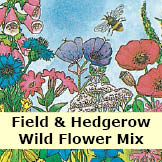 Wildflower Mix, Field and Hedgerow Mix