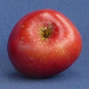 Apple 'Blood of the Boyne'  (Bareroot)