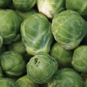 Brussels Sprouts 'Groninger'