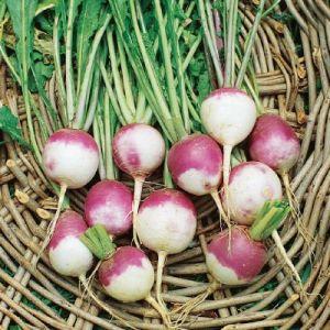 Turnip White Globe