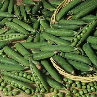 Peas - 'Onward'