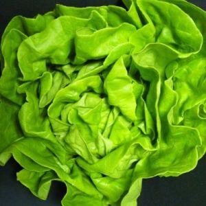 Lettuce, Suzan