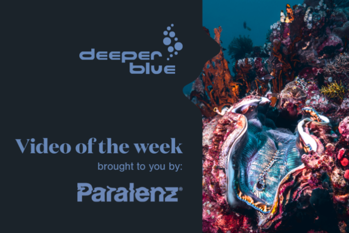 Paralenz Video Of The Week