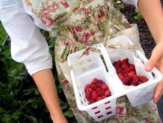 A Portrait Of Feminine Dress, Part 5~ Around The House, picking raspberries, toile apron, floral, raspberry basket, modest dressing