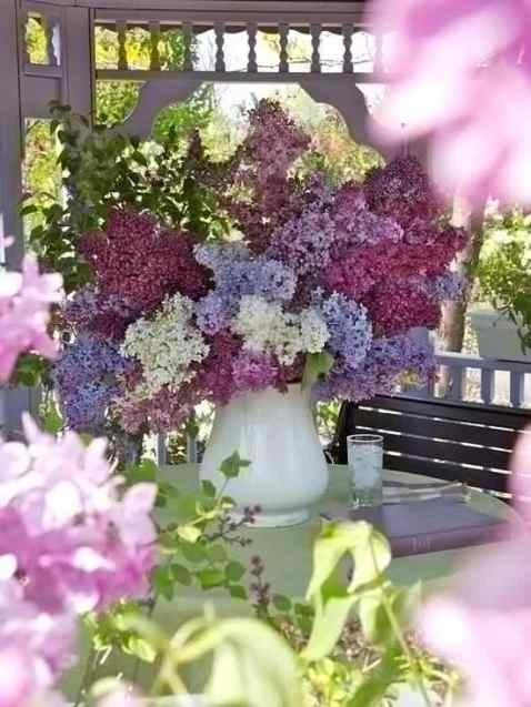 Top Fragrant Flowers and Shrubs For Your Garden, violets, Back to Eden, Nicotiana, Mohawk or Korean Spice , bouquets, 'Big Ben', top picks, 'Sarah Bernhardt', Oriental lilies, Orienpet lilies, no staking, The Lily Garden, daylily, species, hybrid, species, honeysuckle, wildflowers, floral notes, old-fashioned, 'Abraham Darby', childhood, flowering crab apples, spring planting, vase of lilacs,