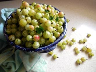 What Are Gooseberries & A Gooseberry Pie Recipe, currants, making pie, keeper of the home, homemaking, old-fashioned, homemade, pie crust, berry picking, European fruit, sweet tart, ribes