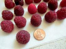 Elegant Little Chocolate Raspberry Clusters, candy, healthy alternative, homemade, fresh raspberries, finger dessert, bonbons, washed and dried
