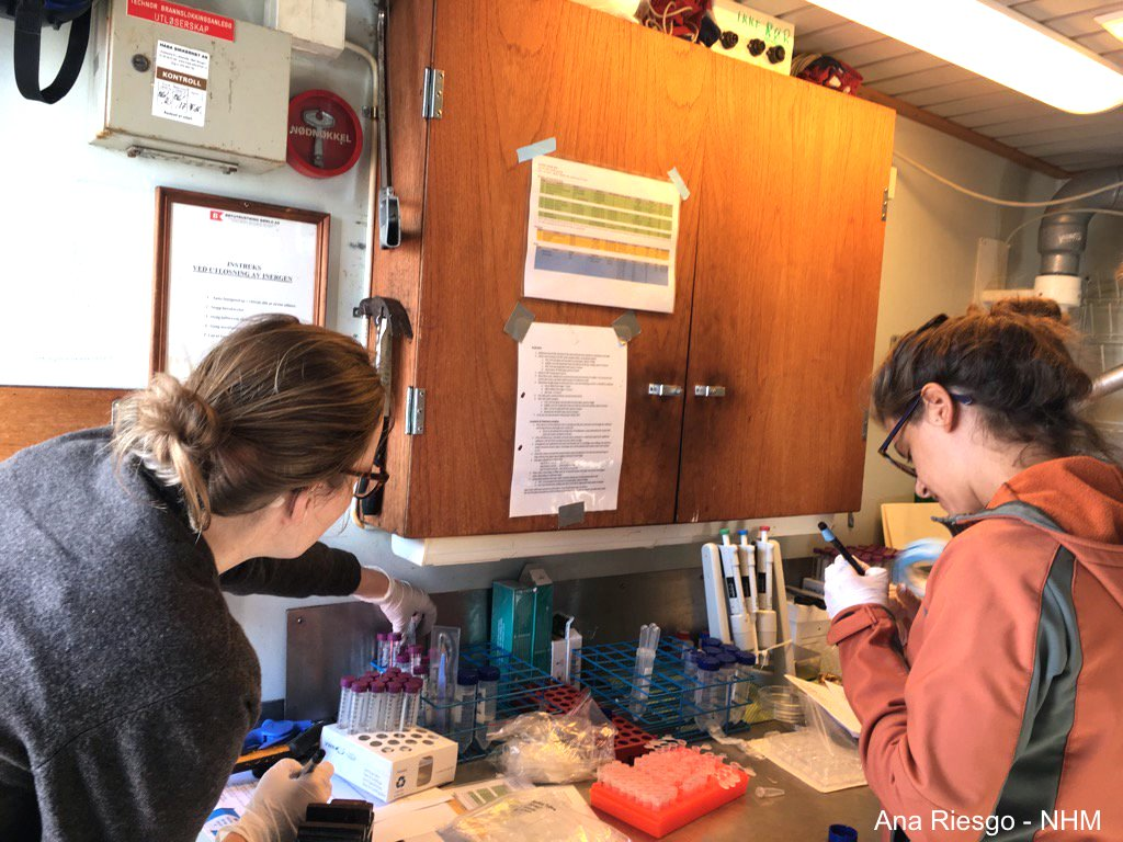 Researchers setting up the lab before sampling deep-sea Porifera for the SponGES EU project