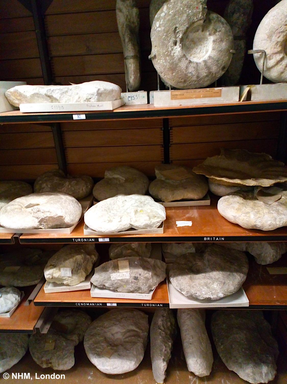 SponGES fossil work NHM UU