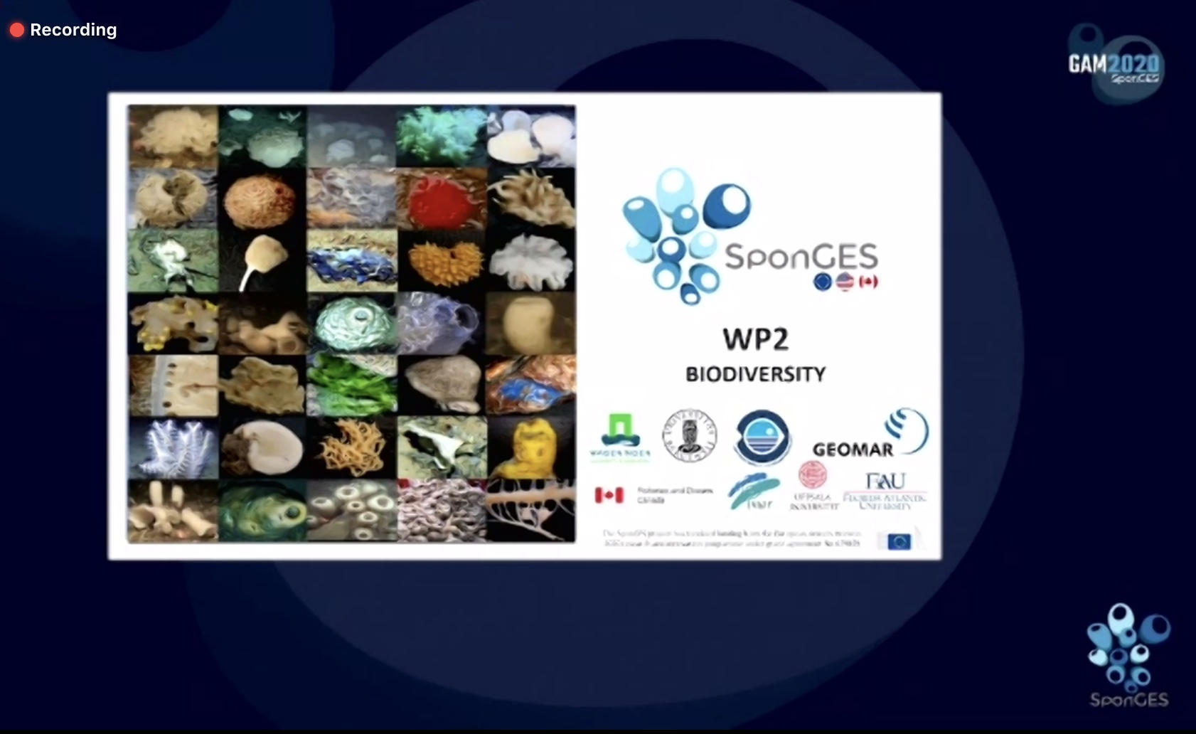 Slide from SponGES WP2 at final meeting