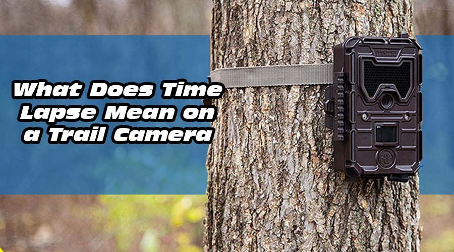 What Does Time Lapse Mean on a Trail Camera