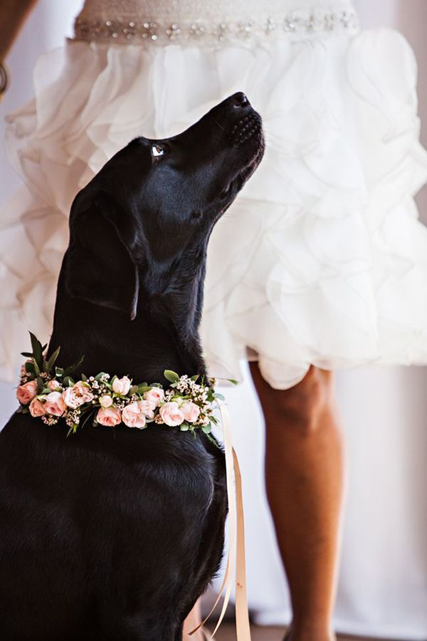54 Photos Of Dogs At Weddings That Are Almost Too Cute For Words Deer Pearl Flowers