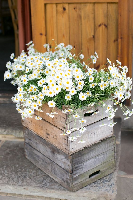 30 Ideas To Incorporate Chamomile Daisies Into Your Wedding Deer Pearl Flowers