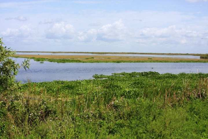 Shown here is the Site 1 Impoundment Project area. It is located adjacent to the Arthur R. Marshall Loxahatchee National Wildlife Refuge, which covers 1,660 acres, and will provide water storage that is considered essential to restoring the Everglades' health and viability. Photo courtesy of the U.S. Army Corps of Engineers