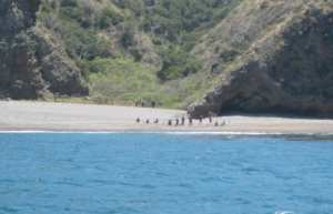 Santa Cruz Island migrants