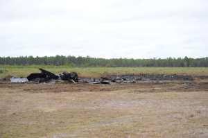 F-22 Tyndall crash site