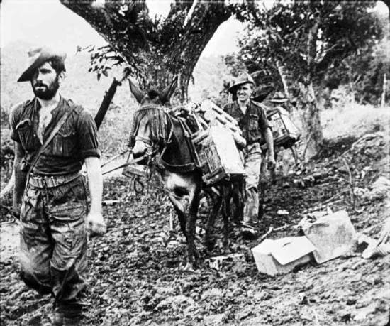 Chindits with their mules carrying supplies make their way through the jungles of Burma. Imperial War Museum photo