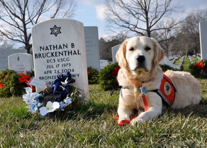 Service Dog Nathan at Arlington National Cemetery