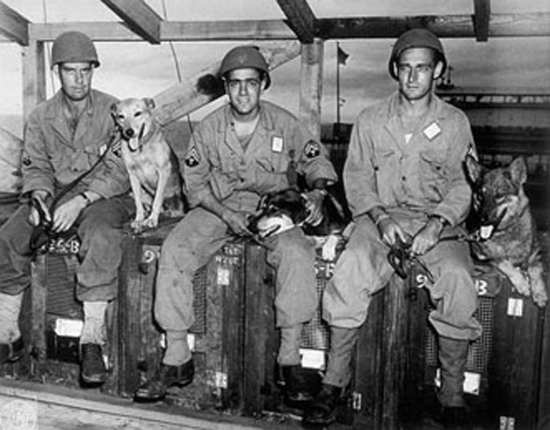 K-9 Unit, Hampton Roads Military Police, World War II. Military working dogs first entered the service in March 1942 to serve in the Army's K-9 Corps. Today, the dogs, who have an actual military service record book assigned to them, are still playing an active role in searching for explosives and seizing the enemy, among other capabilities. DOD photo